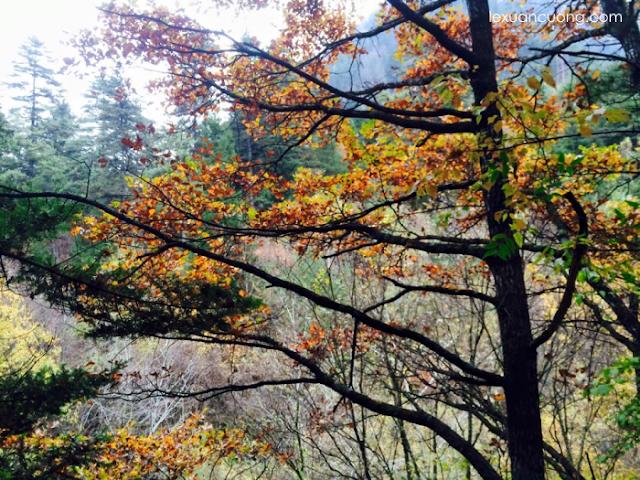 Cả một mùa thu ôn đới với lá vàng, lá xanh.