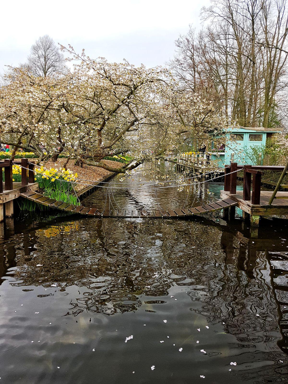 Keukenhof gardens lake