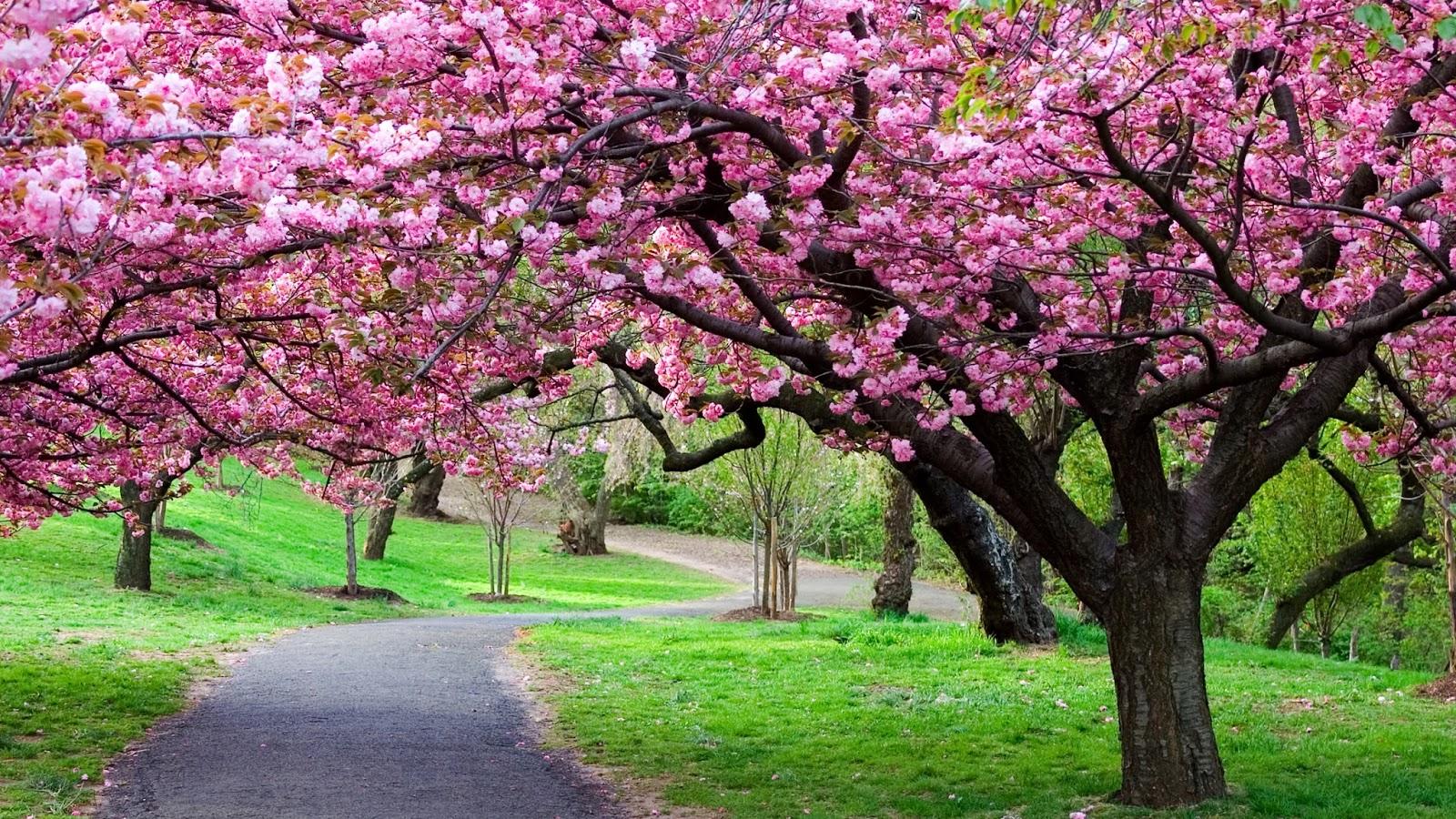 fond d'ecran gratuit printemps paysage