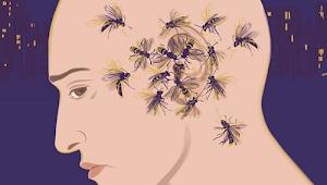 Nyamuk Suka Terbang di Telinga ? Ini Penyebabnya