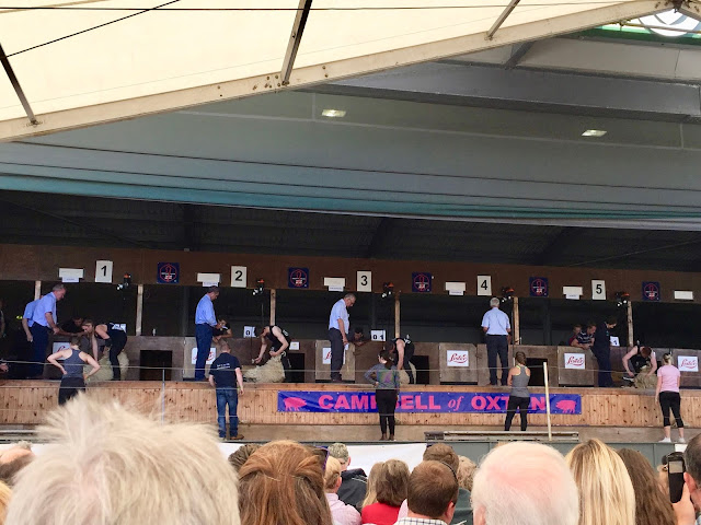 Sheep shearing competition at the Royal Highland Show, Edinburgh, Scotland