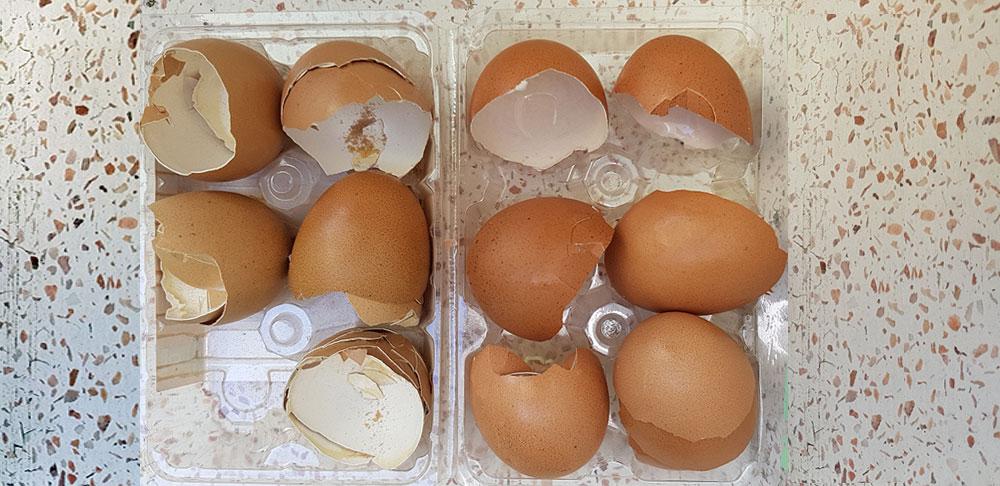 เปลือกไข่
