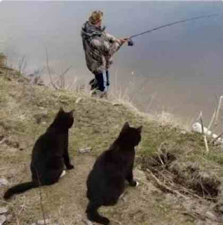 Cats and a fisherman