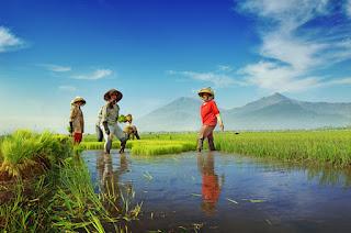 indonesian_farmer_by_nooreva.jpg