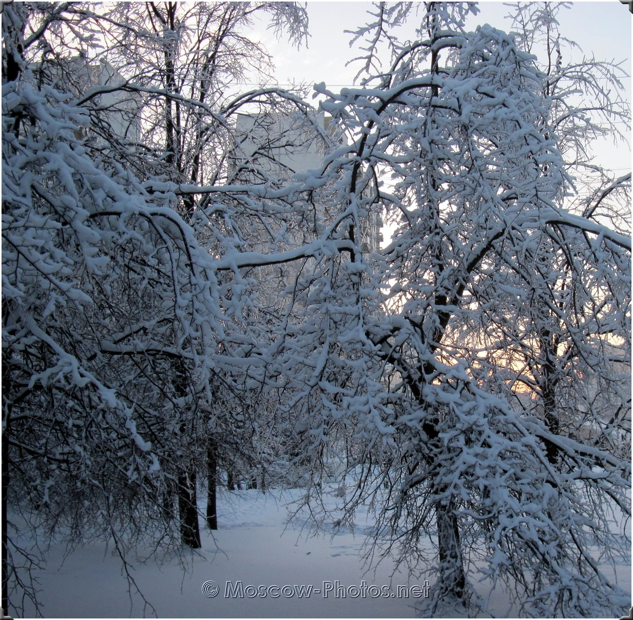 Ice Trees In Moscow