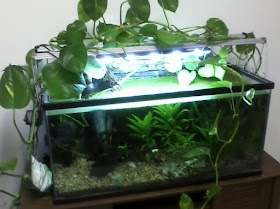Pothos Aquarium for nitrate removal