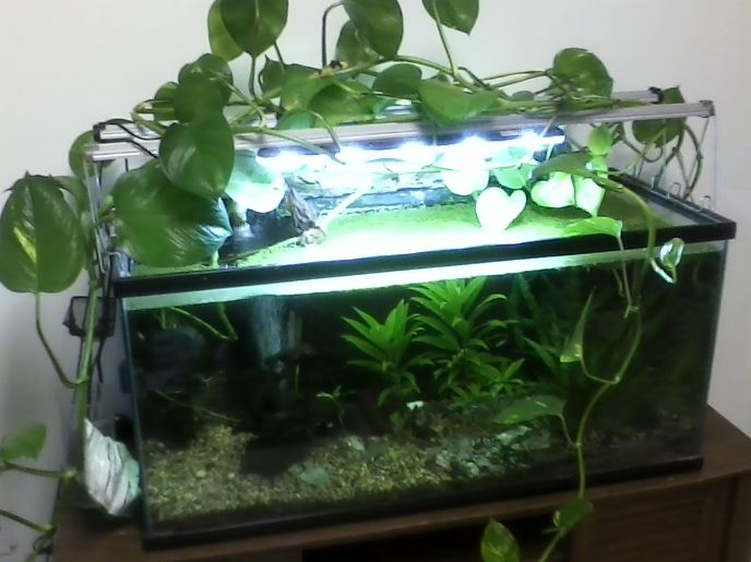 aquarium nitrates lowering nitrate levels how to control
