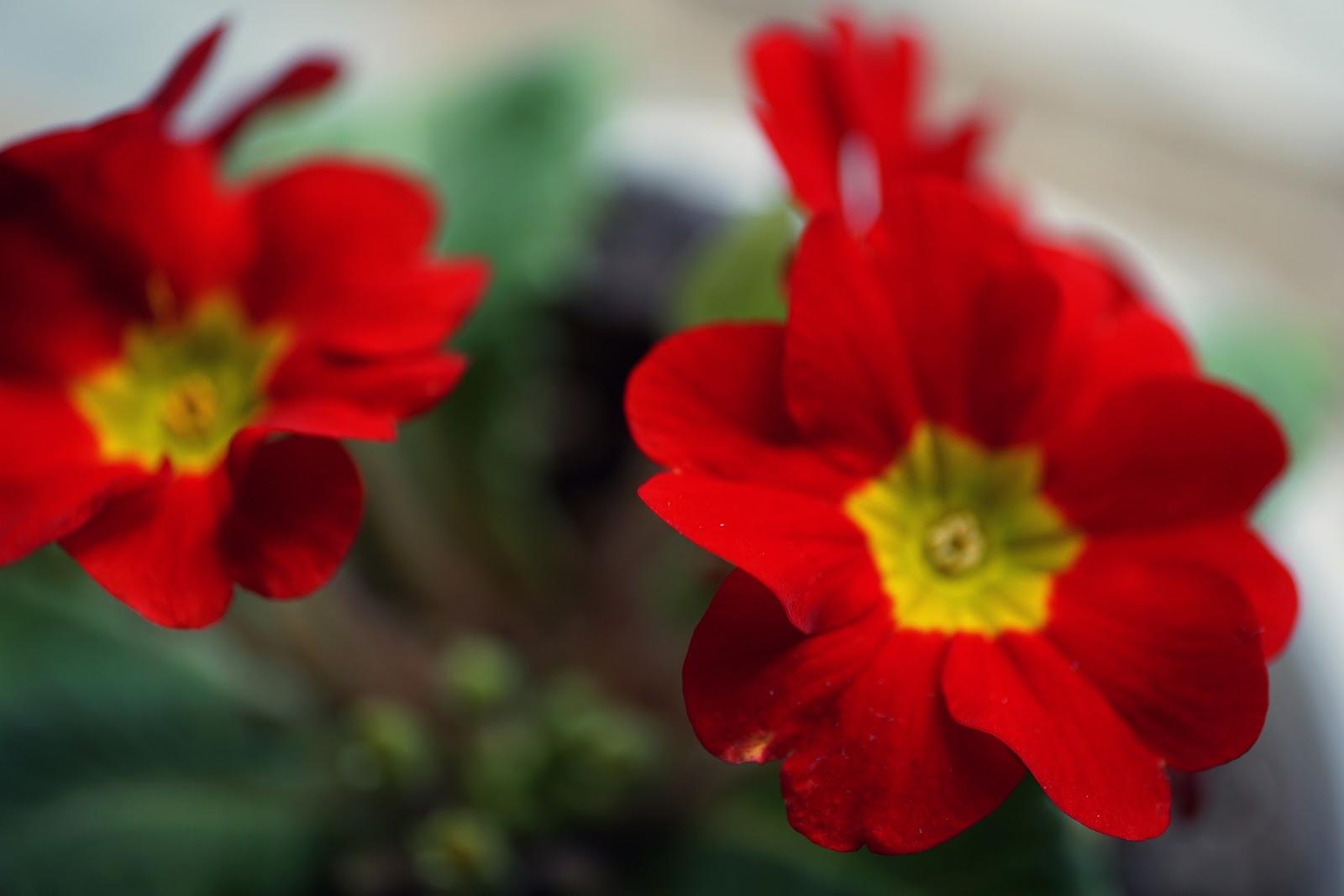 赤くて小さめの花