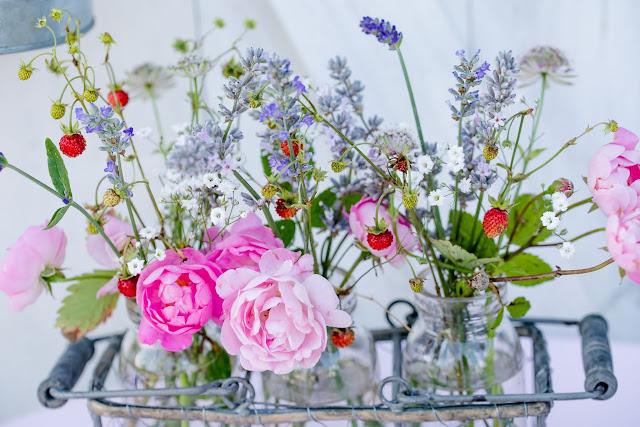 Raubritter, Lavendel, Erdbeeren