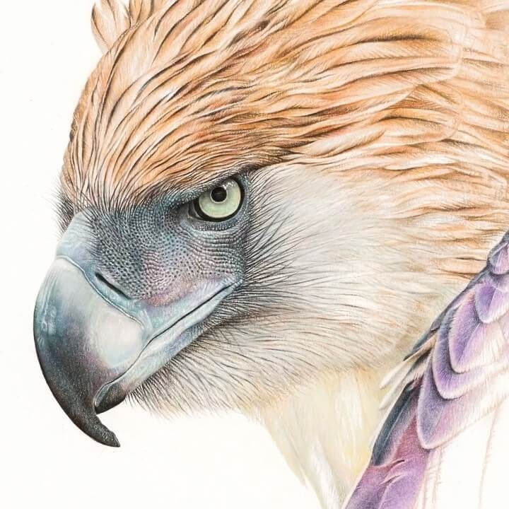 01-Eagle-Martin-Aveling-Animal-Portraits-www-designstack-co