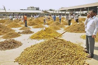 500 Crore Worth Turmeric Sold