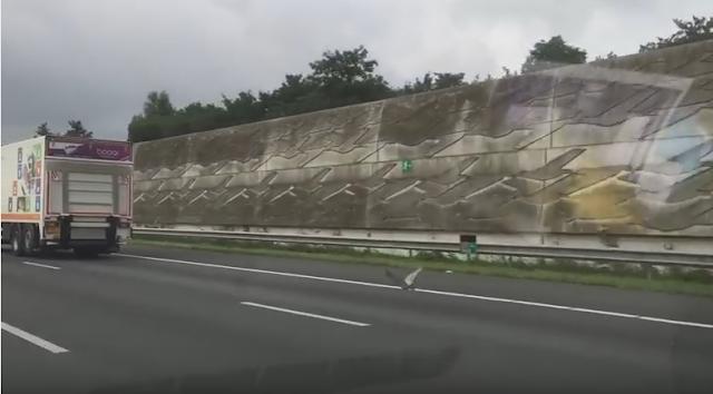 Vídeo paloma a más de 100 kilómetros por autopista Holanda