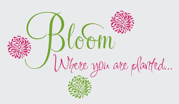 Image result for bloom where you're planted