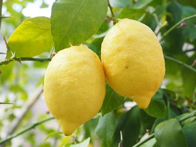 cara menghilangkan ketombe dengan bahan alami lemon
