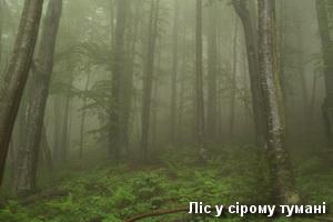 Ліс у сірому тумані