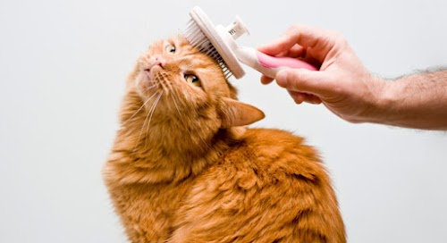 How To Regrow Cat's Hair Faster After Damage