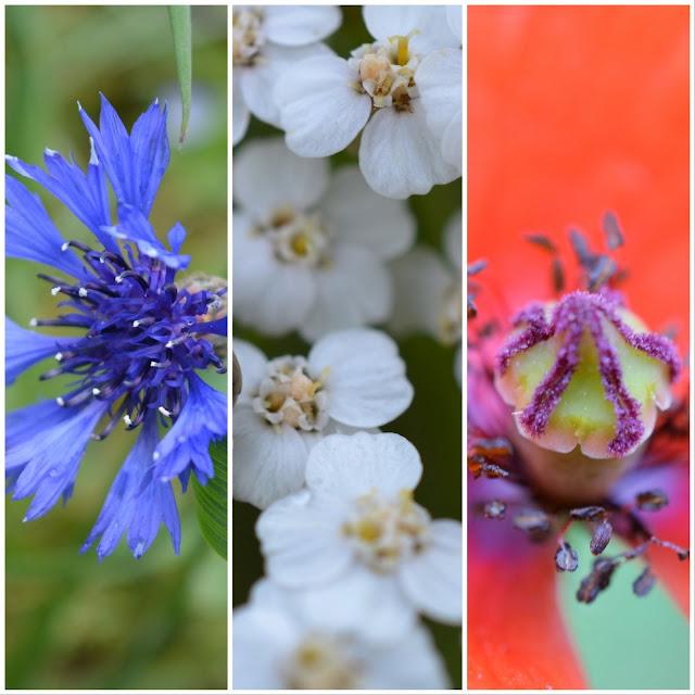 Drapeau Bleu-Blanc-Rouge avec des fleurs