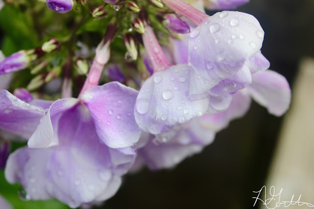 Raindrops on flower