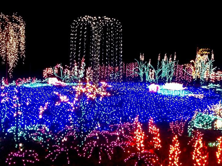 Bellevue botanical garden garden 39 d lights for Bellevue botanical garden lights