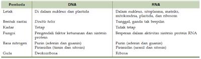 Struktur, Fungsi, Susunan Kimia Penyusun dan Macam-Macam Jenis RNA Serta Perbandingan Dengan DNA