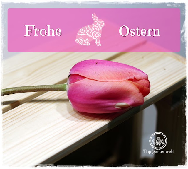 Gartenblog Topfgartenwelt Ostern: Frohe Ostern 2017