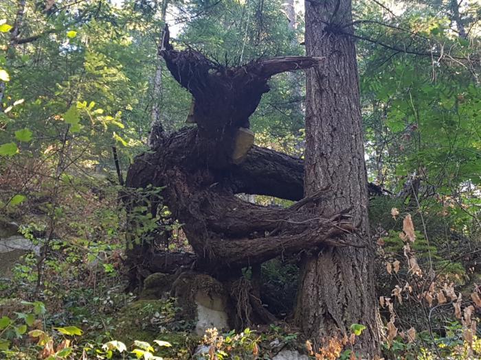 лісовик