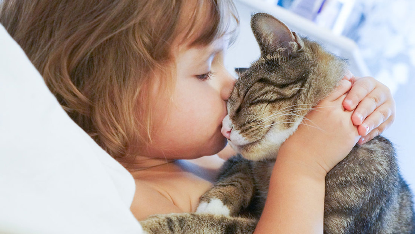 Beneficis per a la salut de tindre un gat