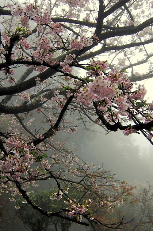 Blossoming tree with pink blooms