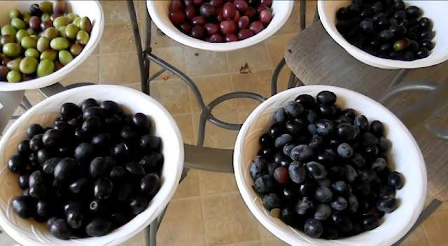 Cara Memanjangkan Bulu Mata Dengan Minyak Zaitun