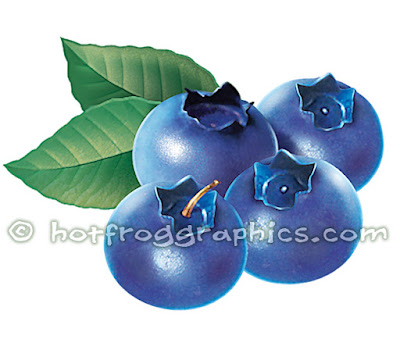 illustration of blueberries on white background