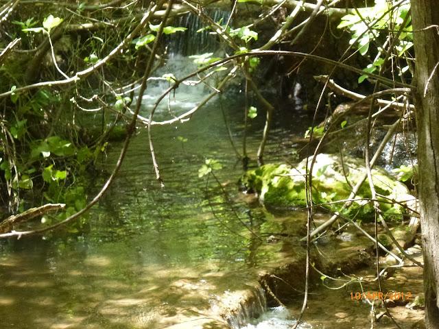 טבע מהמם בנחל עמוד