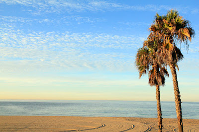 Palm Trees on Pacific Palisades Beach - Photo by Mademoiselle Mermaid