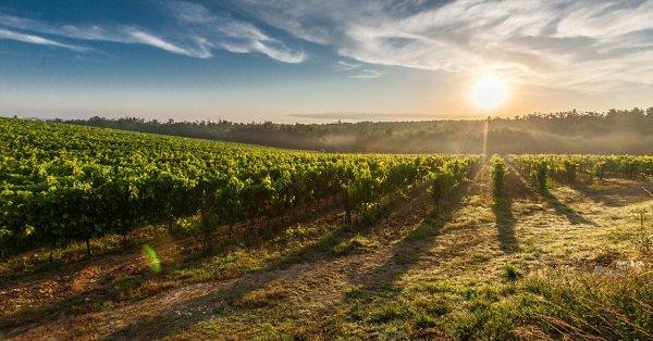 Αγροτική Ανάπτυξη στο Βόρειο Αιγαίο - μια νέα Διέξοδος