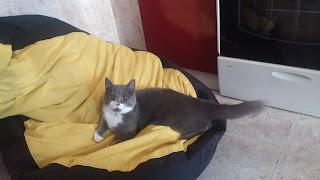 Kedi Sahiplenmek İsteyenler İçin