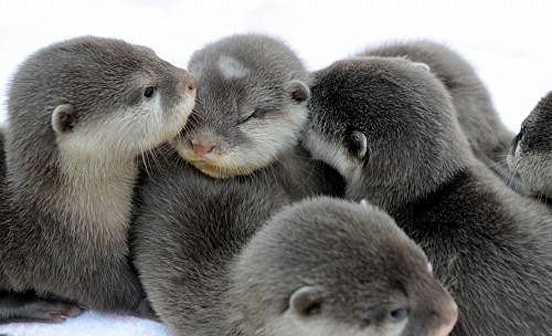 Another Cute Baby Animal Pictures | Amazing Creatures