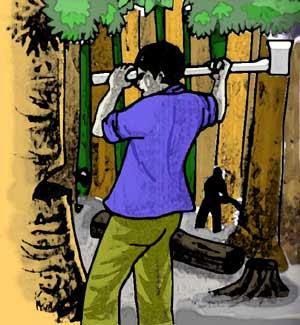 Kisah Seorang Penebang Pohon