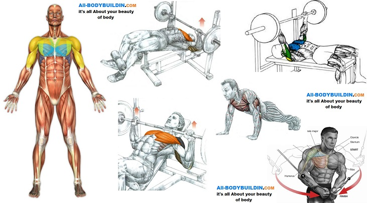 Five Exercises To Build Up Your Chest Muscles Bodydulding