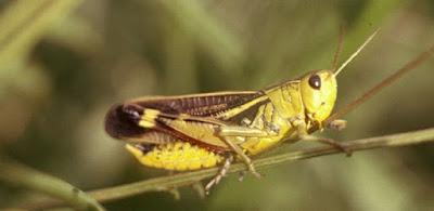 Insectos y entomologia