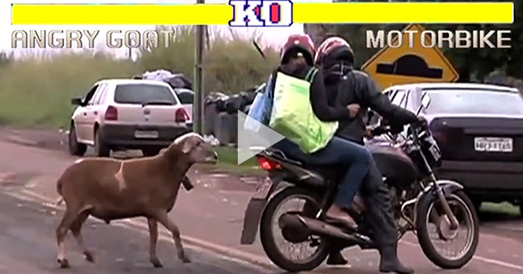 Funny Angry Goat attacking random people, Street Fighter Edition