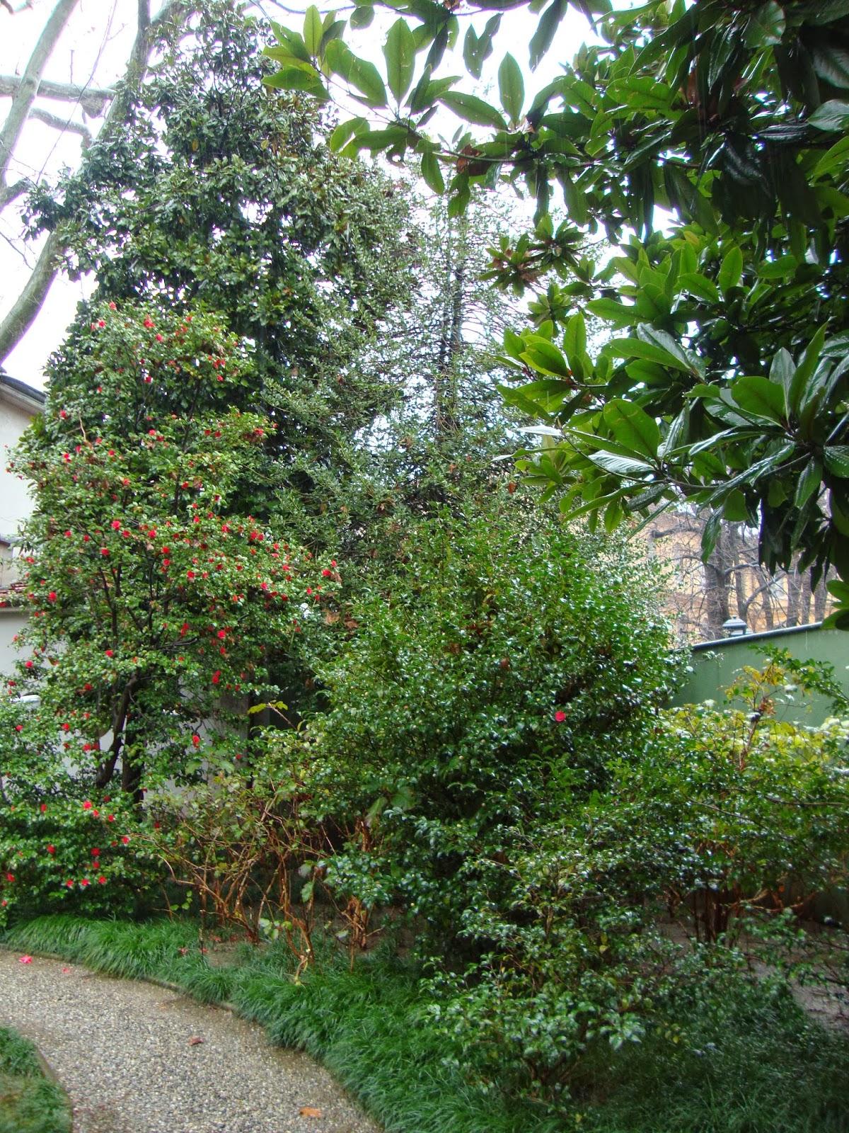 Albero per piccolo giardino - Alberi giardino piccolo ...