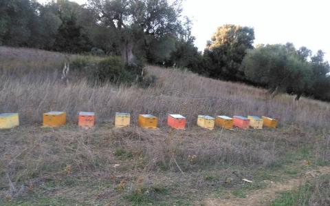 Πωλούνται 10 μελίσσια σε καινούριες κυψέλες στην Πάτρα
