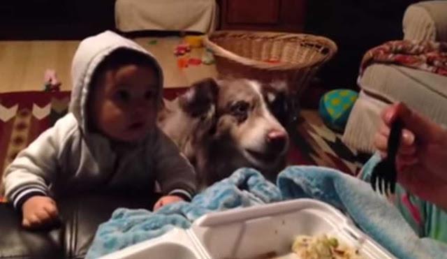¡Adorable! este perro sorprendió a su familia cuando les dijo esta palabra