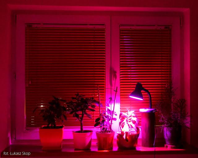 doświetlanie roślin na parapecie