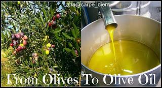Od maslina do maslinovog ulja