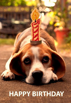 Dog Happy Birthday