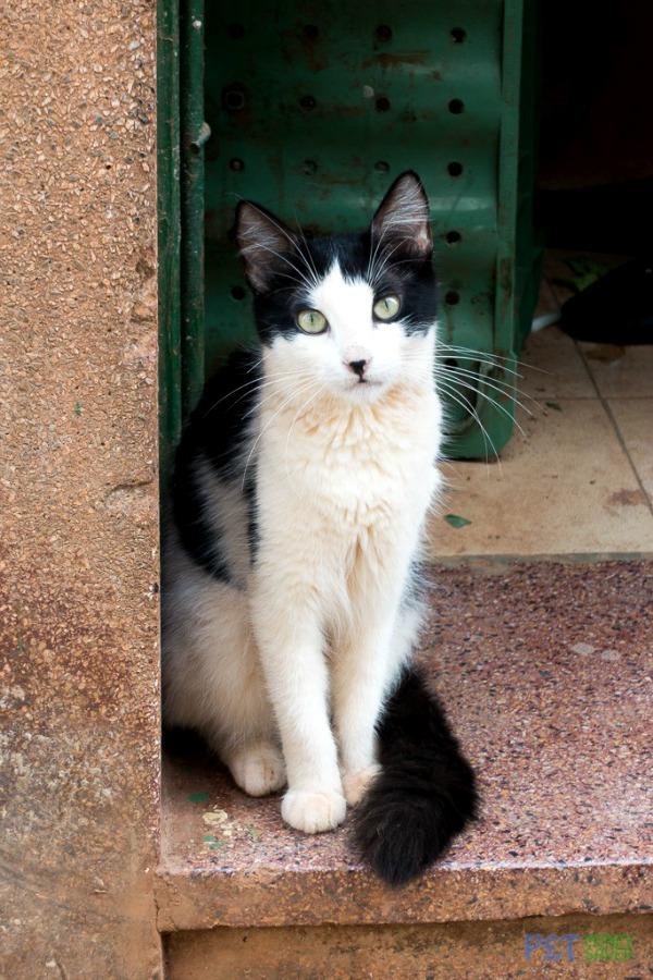 cats of havana
