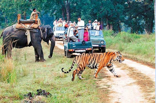 Jim Corbett Resorts Packages