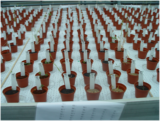 Plants grown in simulated soil environments for Moon, Earth and Mars!