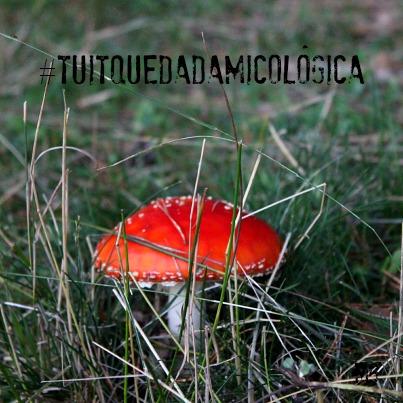 LaTuitQuedadaMicologica en el Pinar de Hoyocasero. MaraEnGredos