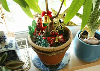クリスマス観葉植物
